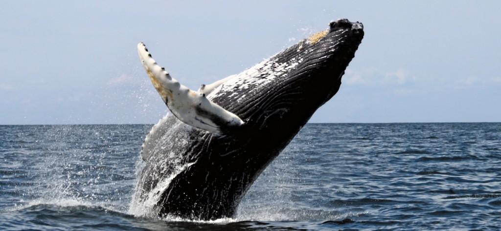 whale-tours